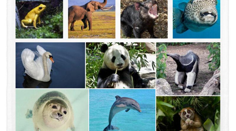 10 lindos animales que pueden matarte