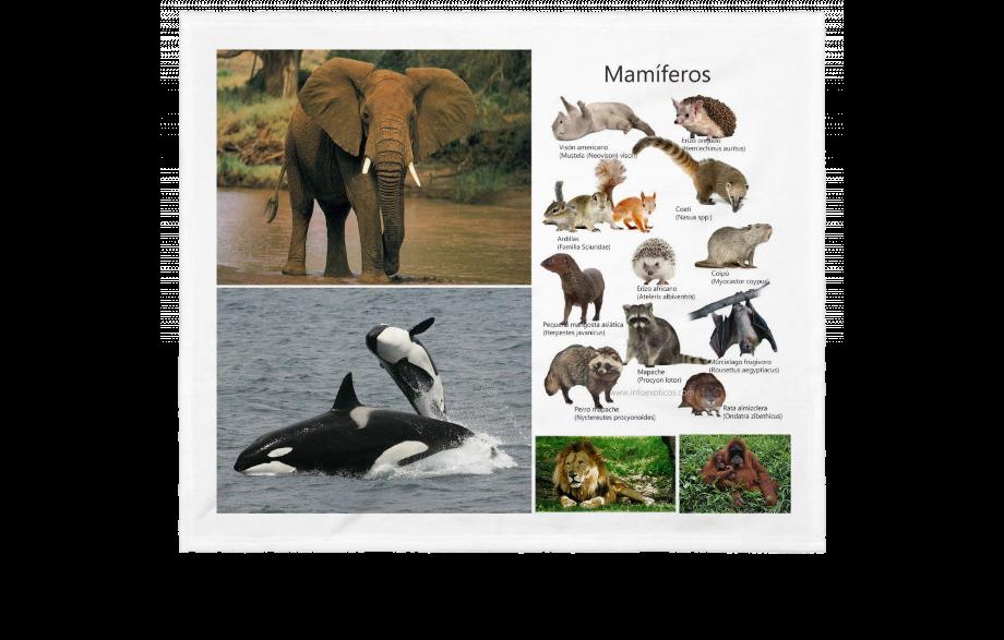 Características de los mamíferos y sus principales especies
