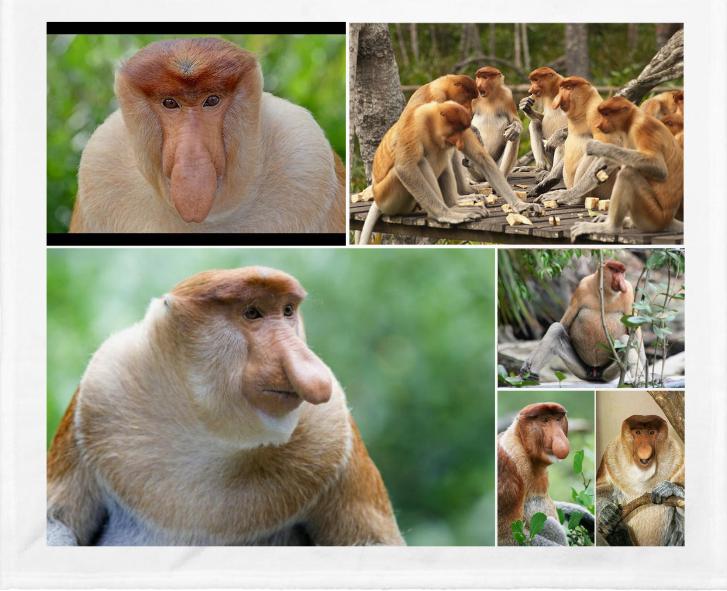 El mono narigudo