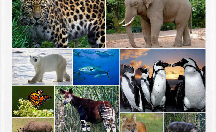 Los 10 animales que no veras en el futuro