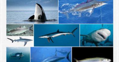Los animales acuáticos más rápidos del planeta