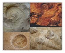 Primeros animales que existieron en la tierra