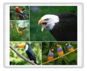 plumaje de las aves