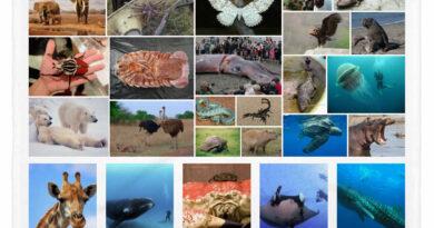 25 animales más grandes del mundo, desde elefantes hasta arañas