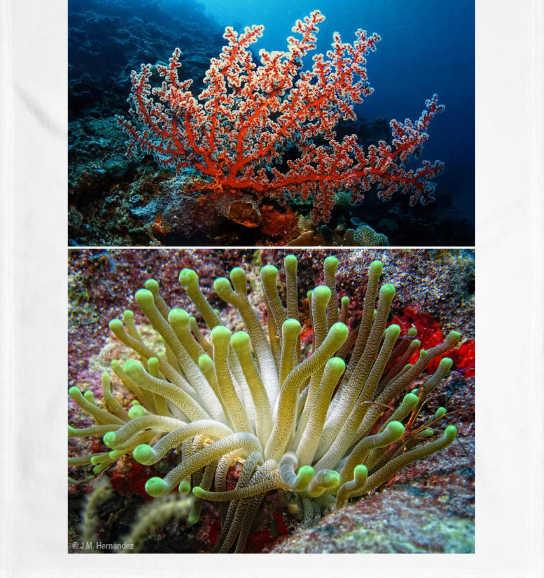 Corales de mar y anémonas de mar