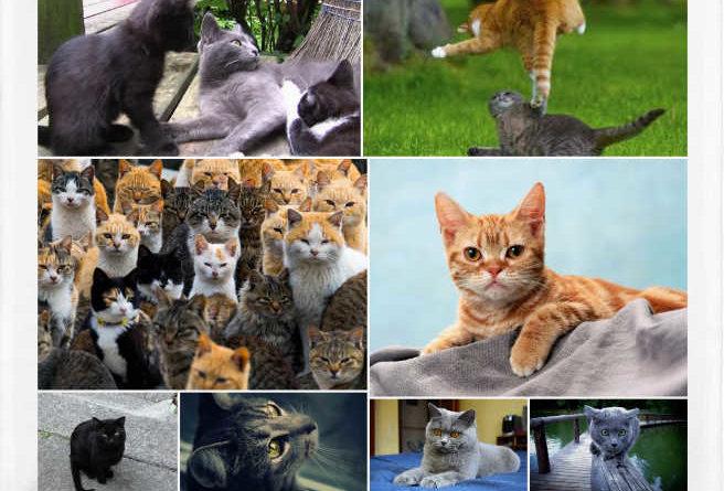 El origen de los gatos y sus principales razas