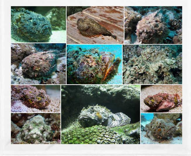 El pez piedra