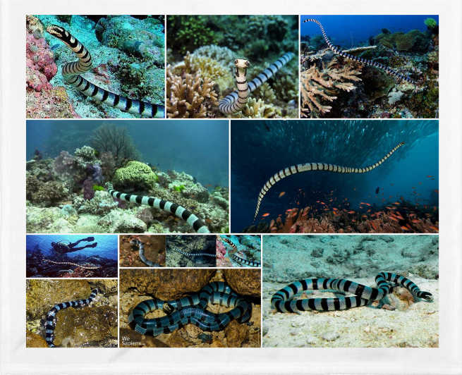 La serpiente marina