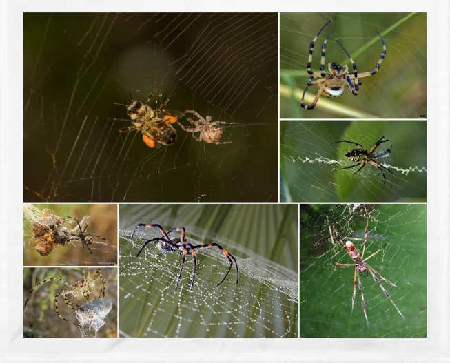 Las trampas de las arañas