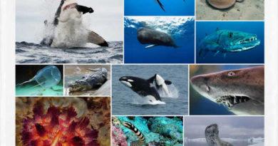 Los animales marinos más peligrosos del mundo