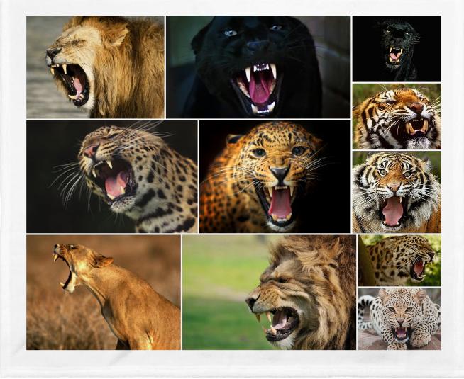 Los dientes de los mamíferos carnívoros