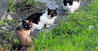 Los gatos vagabundos en el campo
