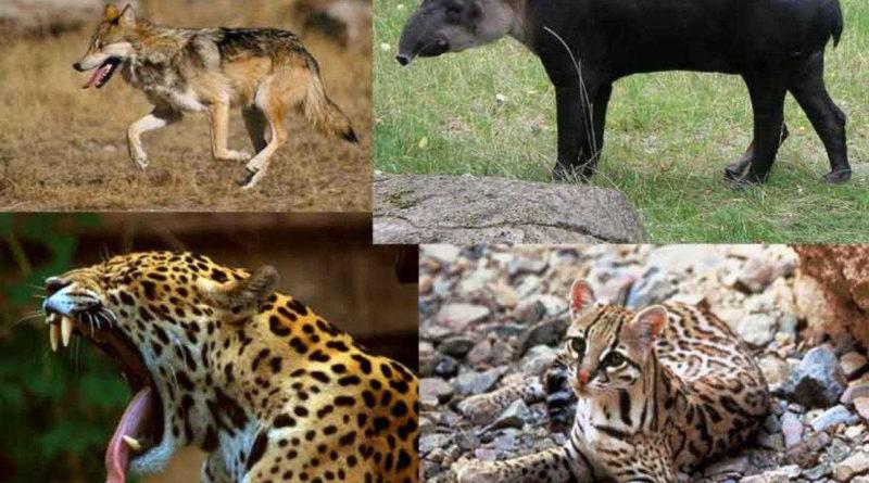 Los mamíferos en peligro de extinción