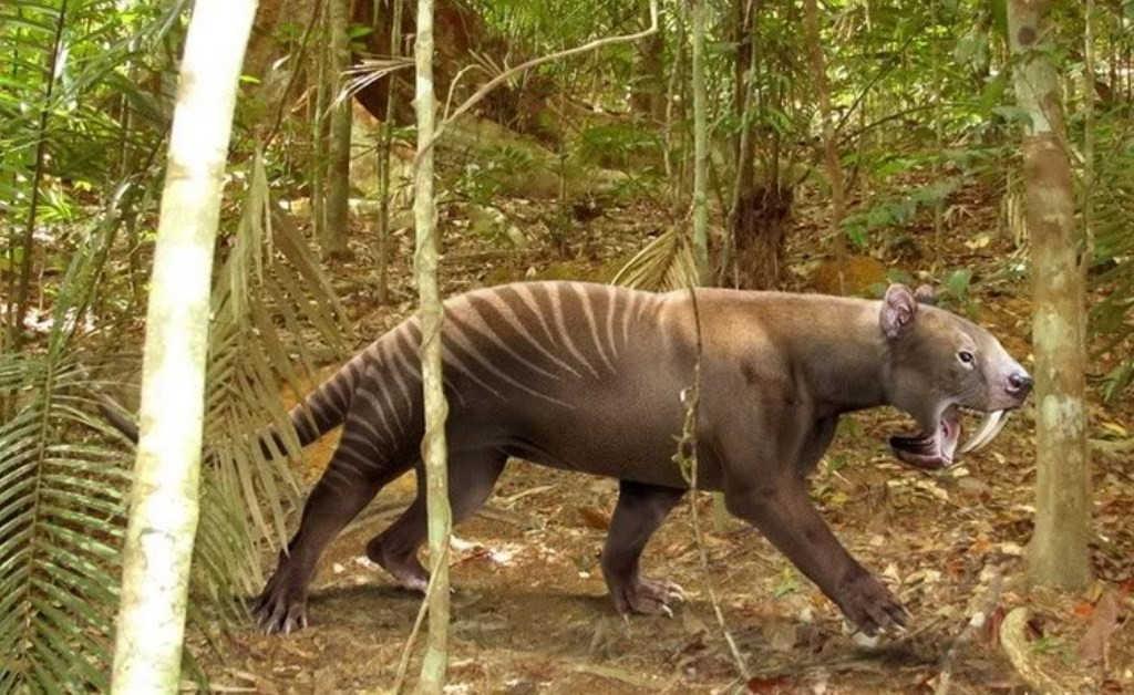 Tigre de dientes de sable marsupial (Tilacosmilo)