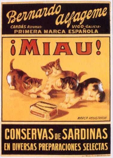 anuncios de gatos