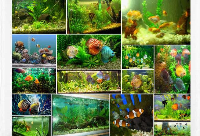 peces de acuarios